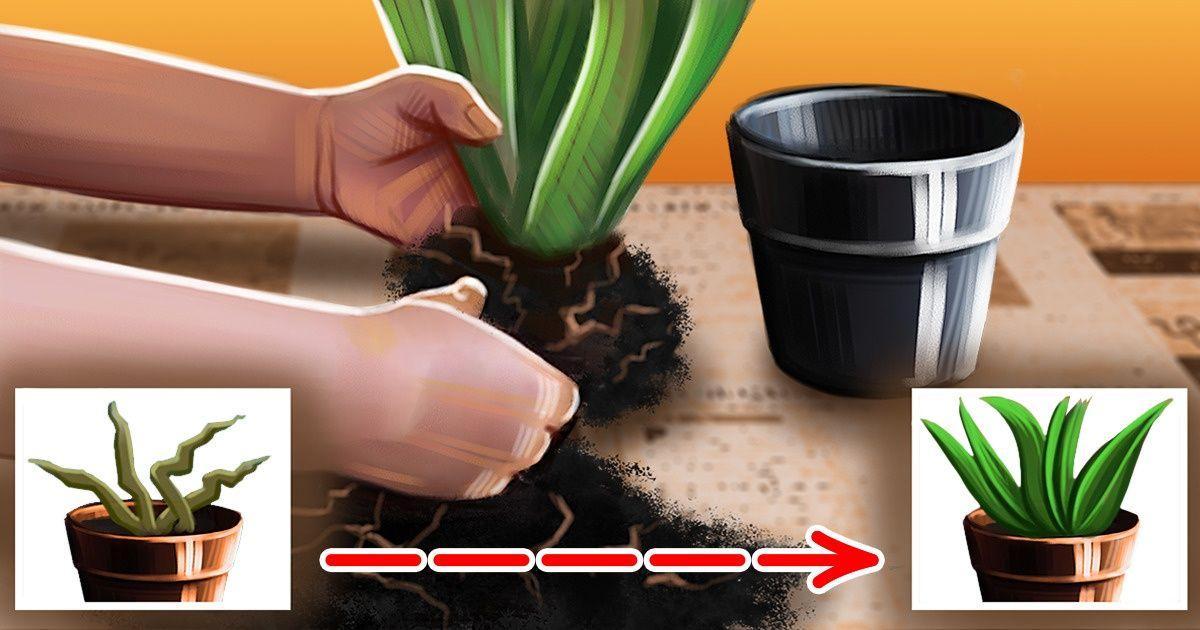 Как вернуть растения к жизни
