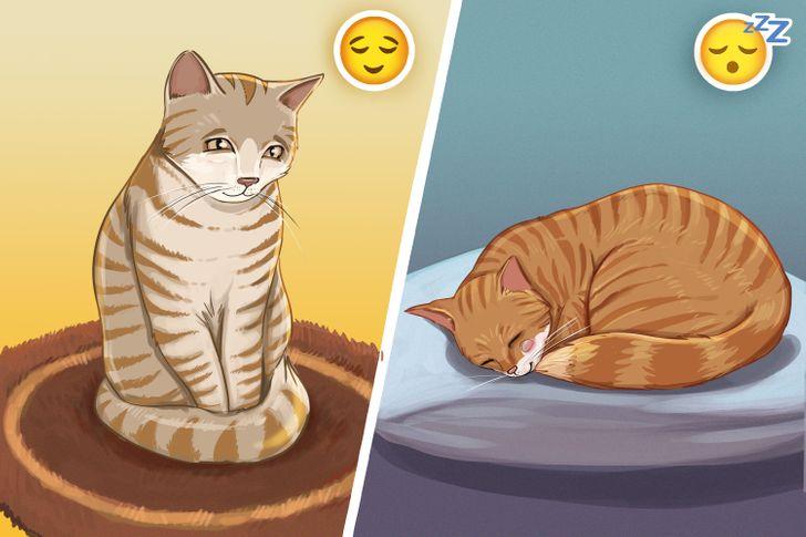 Как по хвосту кошки понять, что она хочет вам сказать